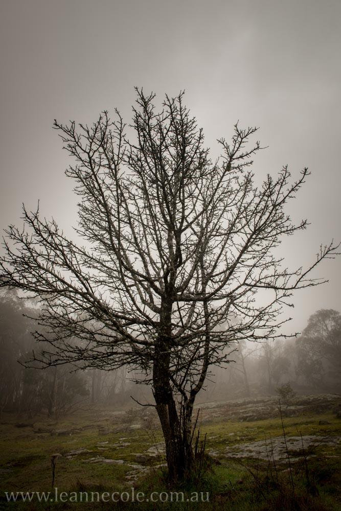 castlemaine-mountain-rocks-bushland-fog-7812