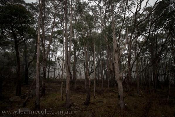 castlemaine-mountain-rocks-bushland-fog-7842