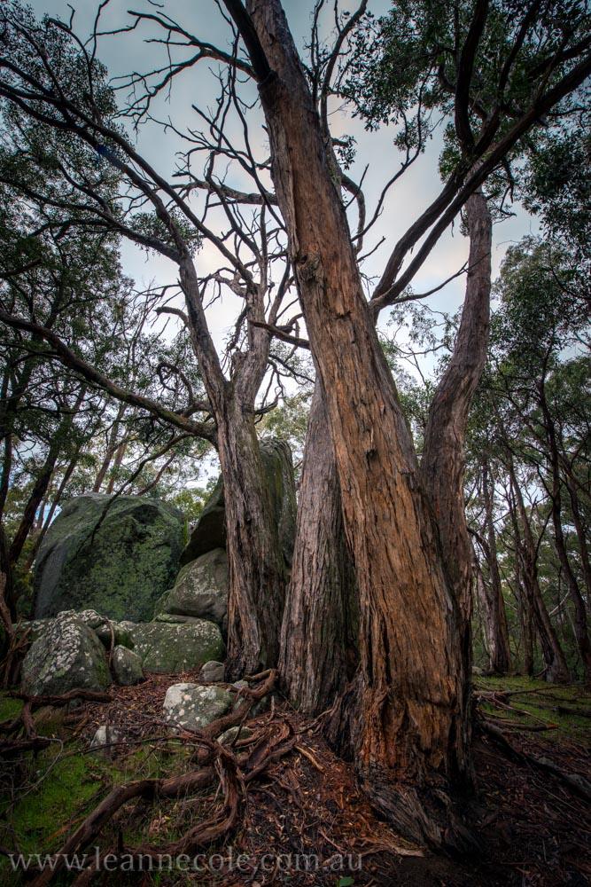 castlemaine-mountain-rocks-bushland-fog-8216