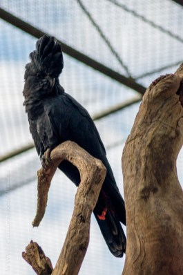 healesville-sanctuary-birds-australian-0798