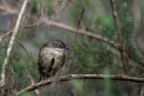 healesville-sanctuary-birds-australian-0891