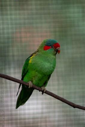 healesville-sanctuary-birds-australian-0912
