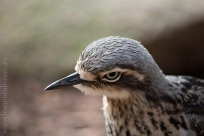 healesville-sanctuary-birds-australian-0940