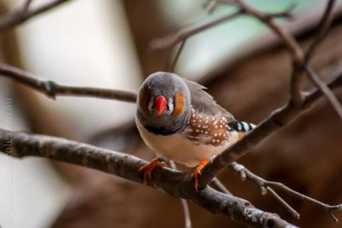 healesville-sanctuary-birds-australian-1052