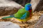 healesville-sanctuary-birds-australian-1097