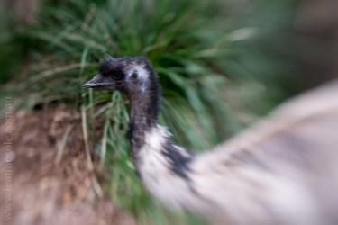 healesville-sanctuary-birds-australian-1471