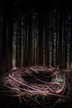 redwood-forest-warburton-nests-victoria
