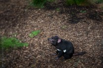 healesville-sanctuary-animals-lensbaby-velvet56-4961
