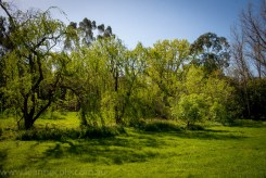 heide-banksia-park-landscape-flowers-113