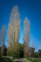 heide-banksia-park-landscape-flowers-117