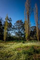 heide-banksia-park-landscape-flowers-118