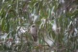 melbourne-banyule-flats-birds-113