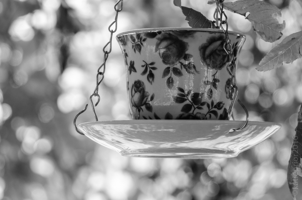 tea-cup-in-the-tree