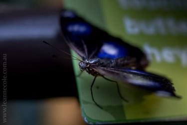 zoo-butterfly-house-lensbaby-velvet56-5737