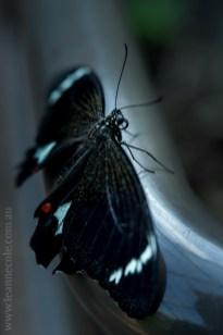 zoo-butterfly-house-lensbaby-velvet56-5749