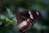 zoo-butterfly-house-lensbaby-velvet56-5776