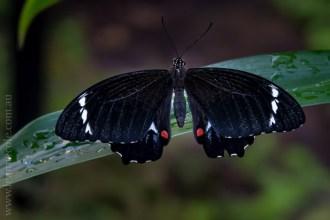 zoo-butterfly-house-lensbaby-velvet56-5779
