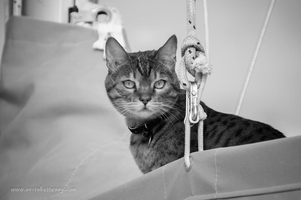 mm3-25-cat