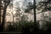bonnie-doon-fog-winter-1025