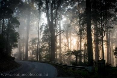 bonnie-doon-fog-winter-1027