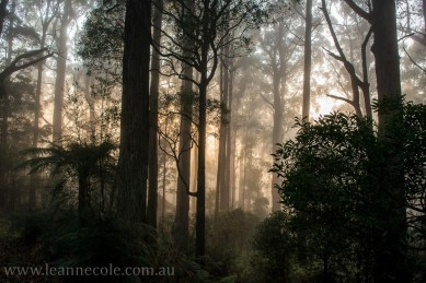 bonnie-doon-fog-winter-1028