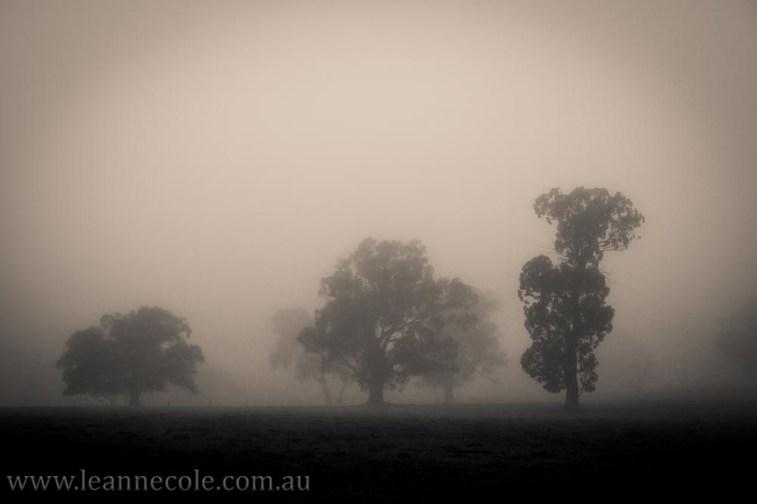 bonnie-doon-fog-winter-1029