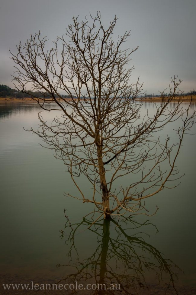 bonnie-doon-fog-winter-1035