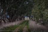 victoria-country-roads-winter-3932