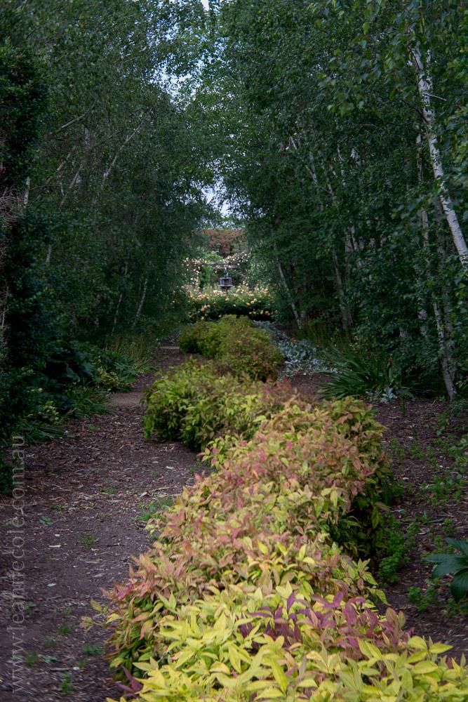 alowyn-gardens-lensbaby-velvet56-yarraglen-1980