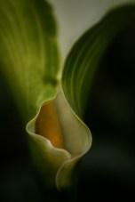 alowyn-gardens-flower-lensbaby-velvet56-9072