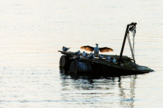 apollo-bay-sunrise-harbour-birds-1