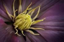 flower-alowyn-gardens-nikon-macro