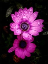 flower-garden-phone-samsung-galaxys7edge