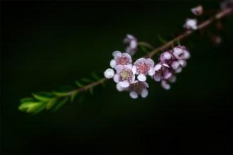 native-australian-flower-lensbaby-velvet56