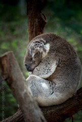 healesville-sanctuary-animals-birds-australia-4657