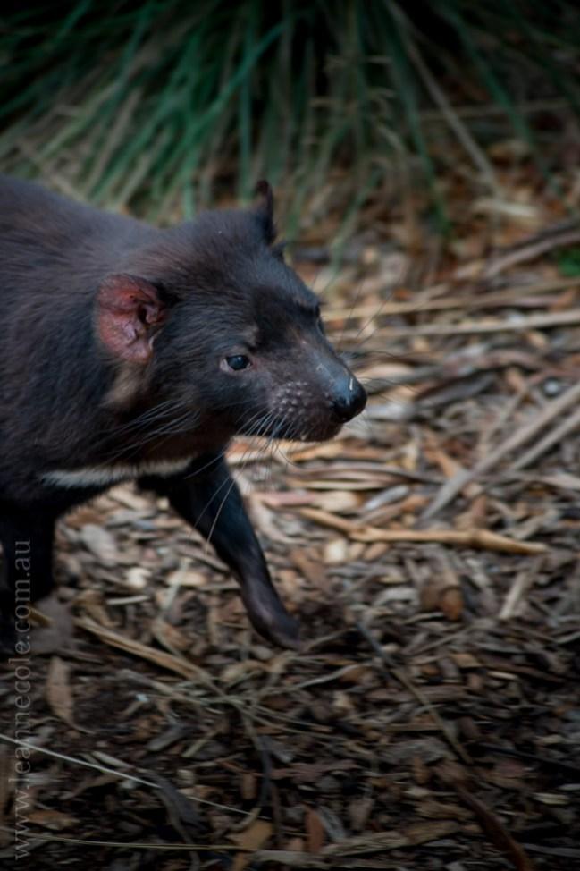 healesville-sanctuary-animals-birds-australia-4913