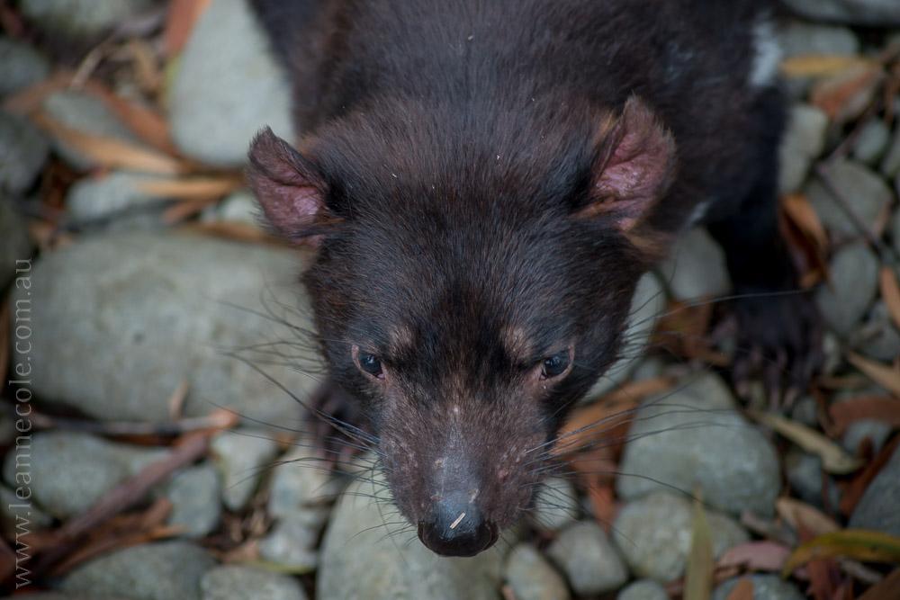healesville-sanctuary-animals-birds-australia-4923