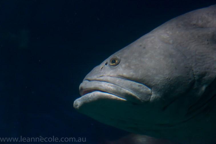 melbourne-aquarium-fish-turtles-penguins-109