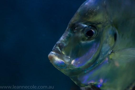 melbourne-aquarium-fish-turtles-penguins-111