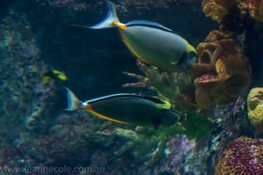 melbourne-aquarium-fish-turtles-penguins-118