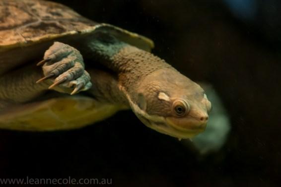 melbourne-aquarium-fish-turtles-penguins-122