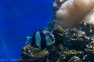 melbourne-aquarium-fish-turtles-penguins-127