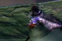 melbourne-aquarium-fish-turtles-penguins-137