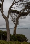 phillip-island-churchillisland-walk-victoria-6603