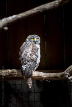 phillip-island-wildlife-park-5672