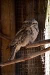 phillip-island-wildlife-park-5722