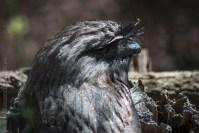 phillip-island-wildlife-park-5740