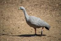 phillip-island-wildlife-park-5861