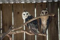 phillip-island-wildlife-park-5871