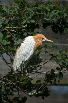 phillip-island-wildlife-park-5935